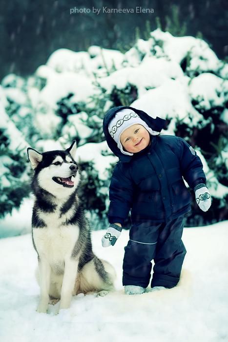 фото хаски и дети